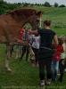 Pony Tag_3