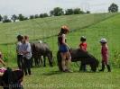 Pony Tag_6